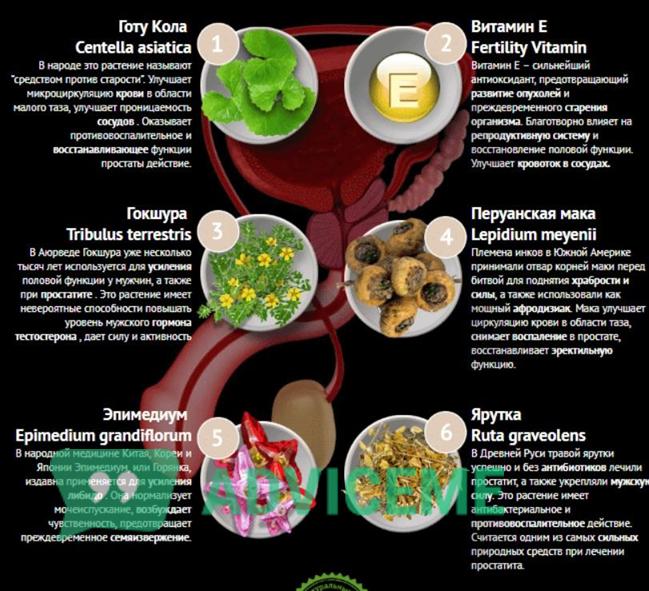Состав натурального средства от простатита
