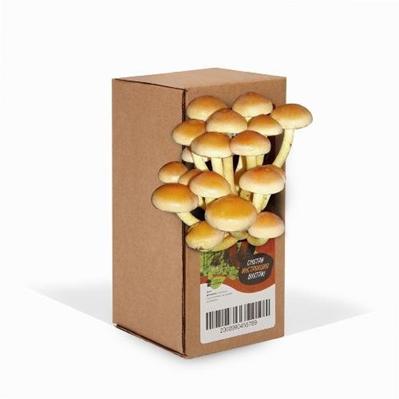 Домашняя грибница опята в коробке, отзывы